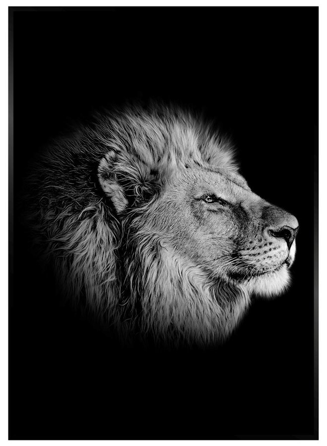Black Lion III hout