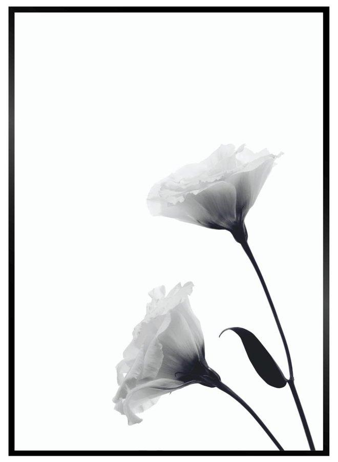 Black Lisianthus Print