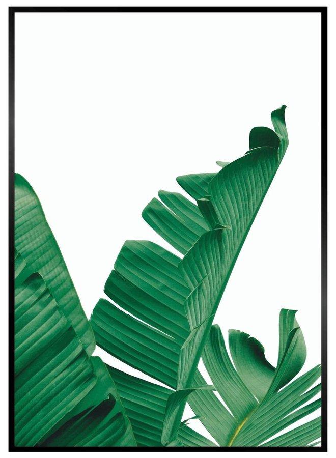 Banana Leaf Rechts Poster