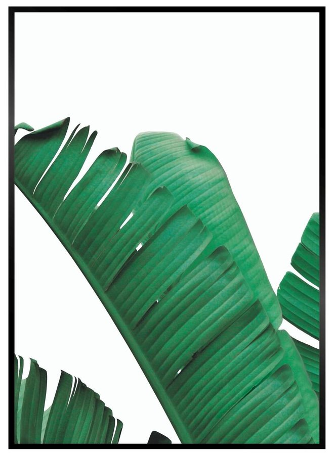 Banana Leaf Links Poster