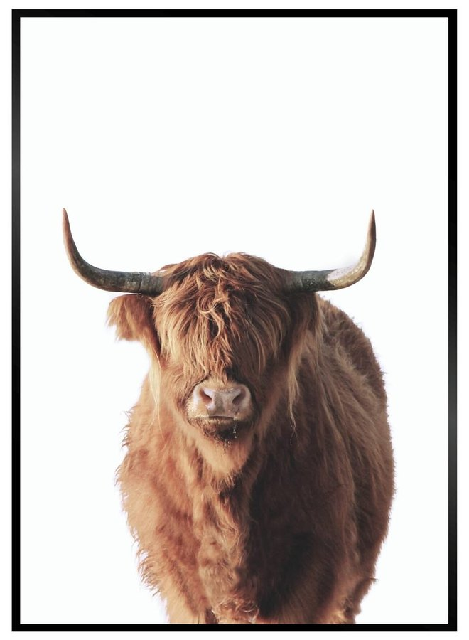 Highland Cow Poster Brown