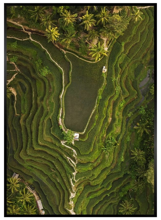 Rice Fields from Above Poster