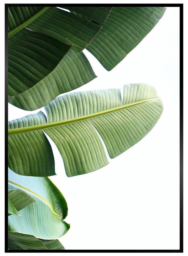 Bananenblad Poster