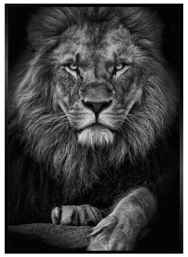 Leeuw Zwart Headshot Poster