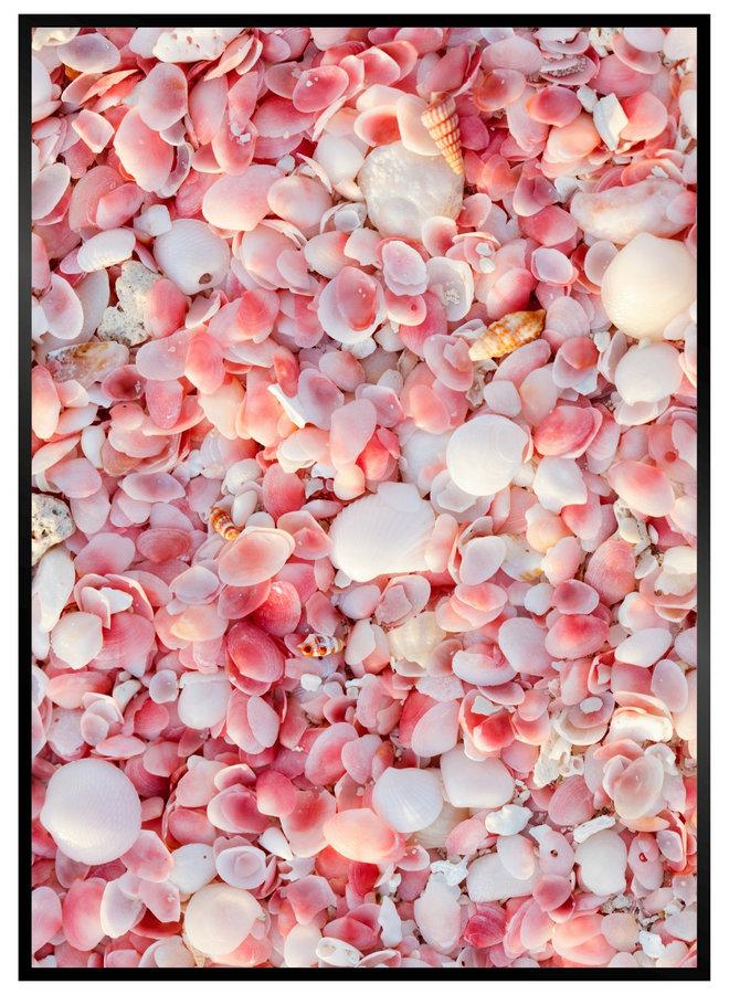 Pink Schelpen Poster
