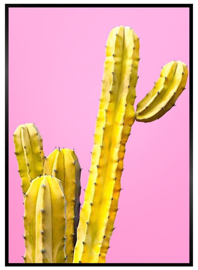 Pink Yellow Cactus Poster