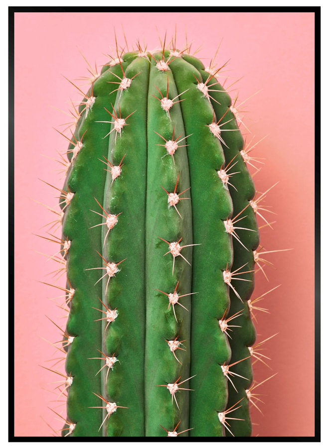 Pink Cactus II Poster