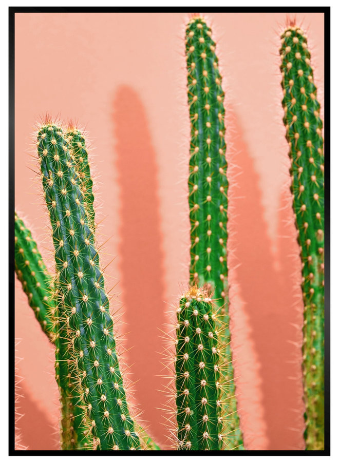 Pink Cactus IV Poster