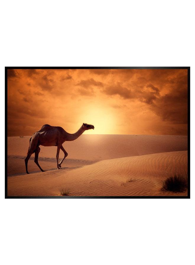 Kameel in de Woestijn Poster