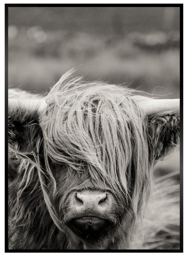Schotse Hooglander IV Poster