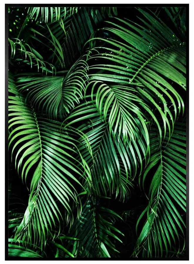 Palm Leafs Black Poster