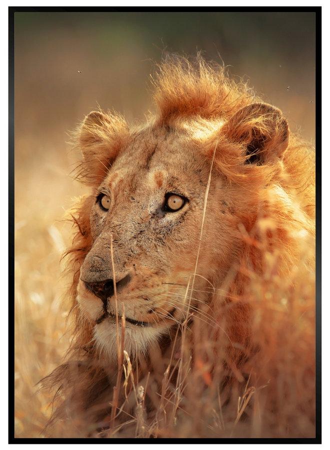 Big Lion Poster