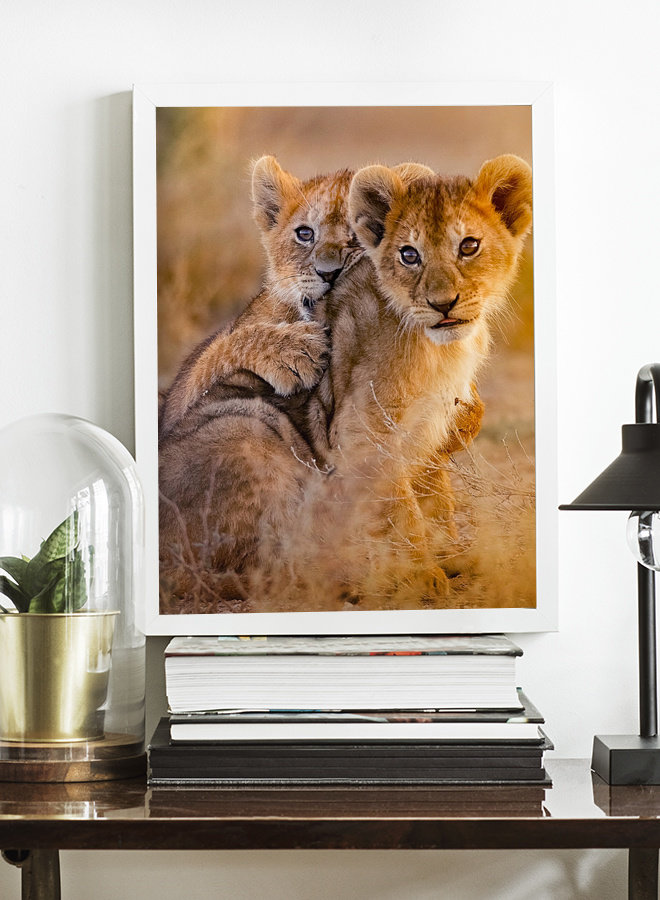 Baby Lions Poster