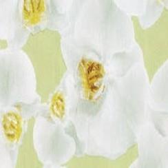 Plakfolie orchidee verpakt per 6 rollen