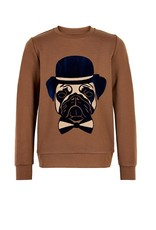 The New Sweater bruin hond