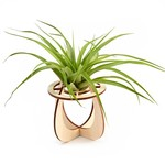 Airplant holder 'Cherry'