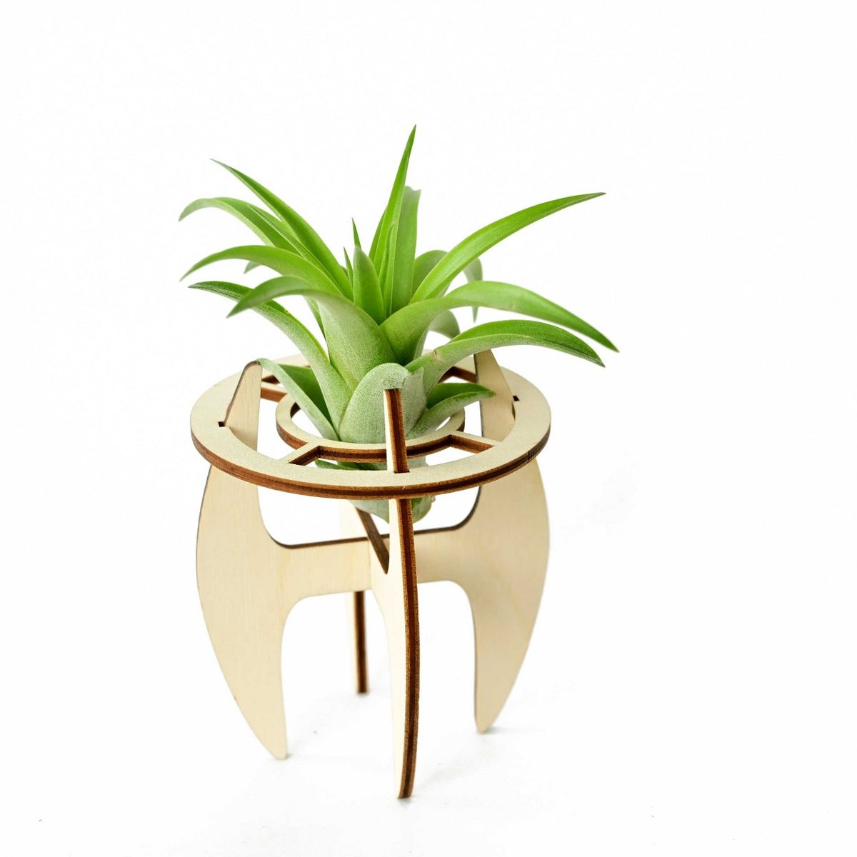 Airplant holder - S