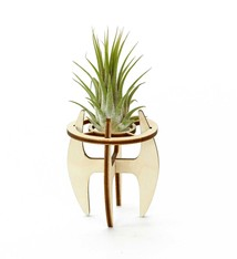 Airplant holder - M
