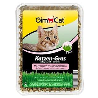 Gimcat Gimcat kattengras