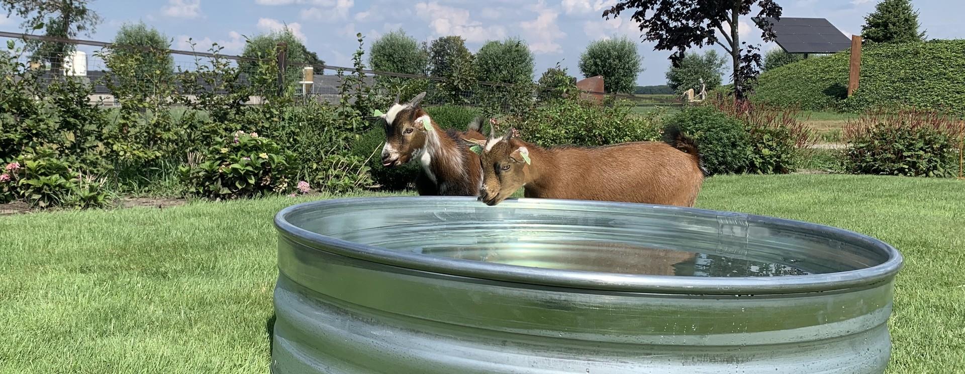 Tankkd sheep stock tanks round
