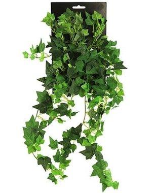 Hedera groen