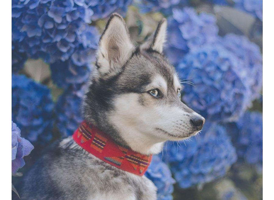 Etna red dog collar
