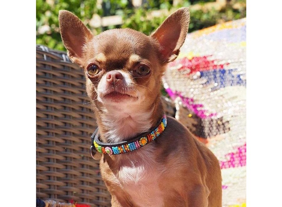 Beaded Dog collar Frutellina