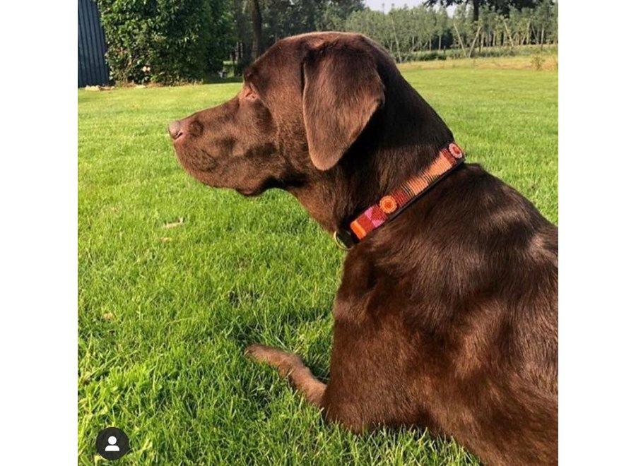 Beaded Dog collar Framboise