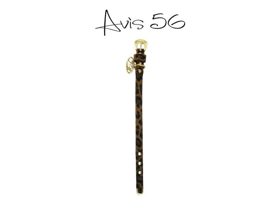 Dog collar Avis Gold