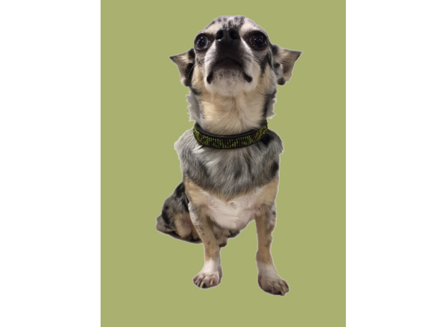 Beaded Dog collar Lex