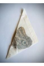 . Unmounted Caligo Telamonius (Owl eye butterfly)