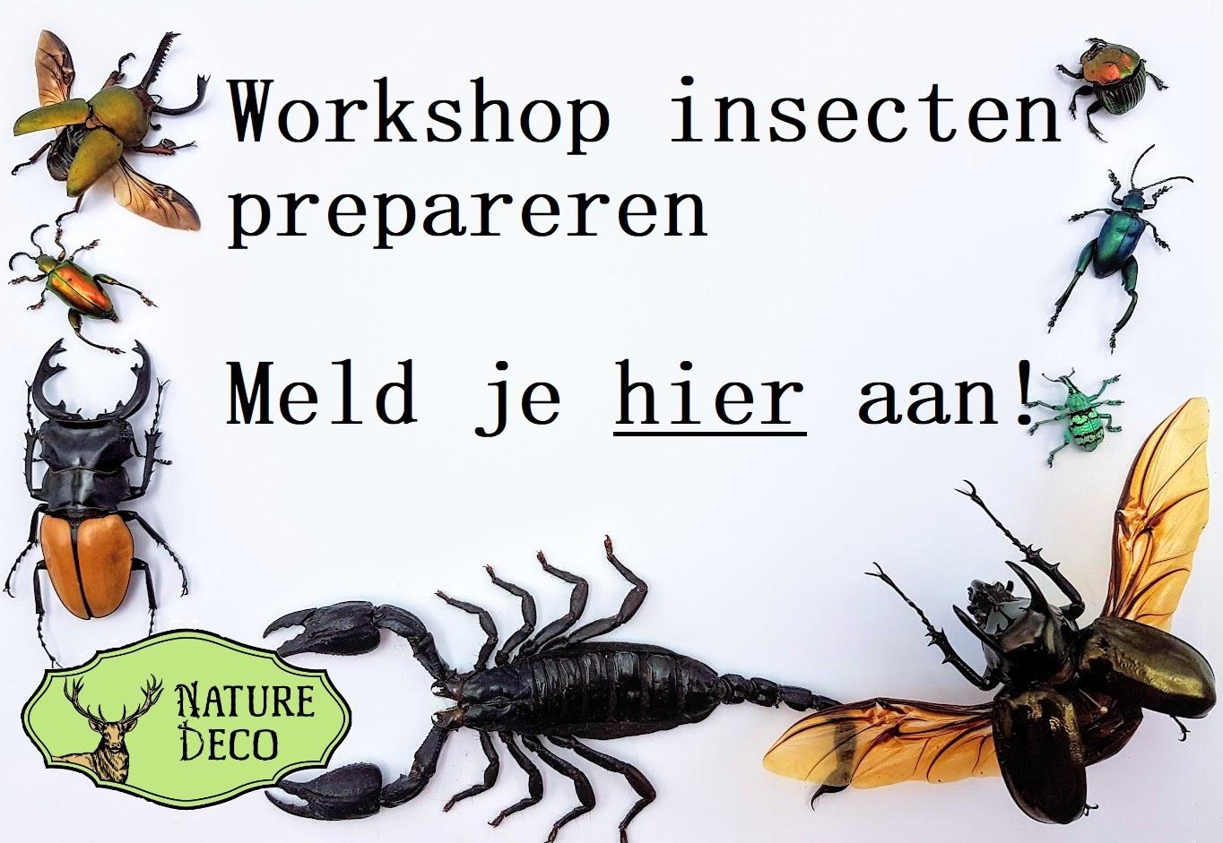 Workshop insecten prepareren