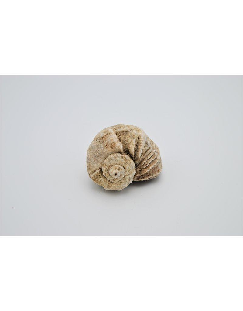 . Shell