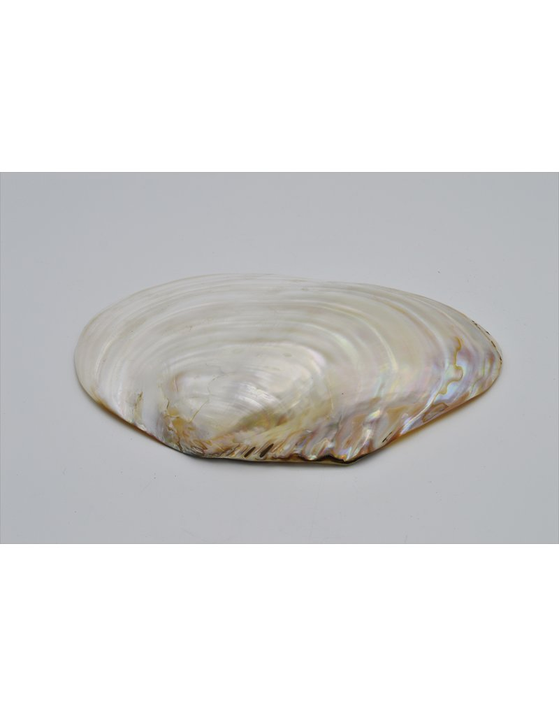 . Pearl shell