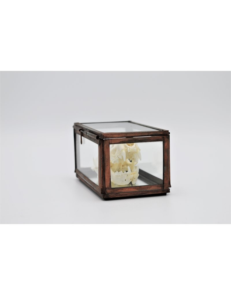 Nature Deco Schedel nerts in box