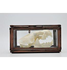 Nature Deco Skull mink in a box
