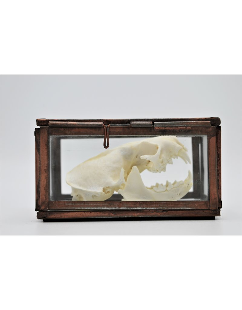 Nature Deco Skull mink in a box
