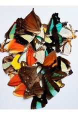 . Buttefly wings diverse 10 pieces