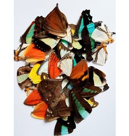 . Butterfly wings diverse 10 pieces