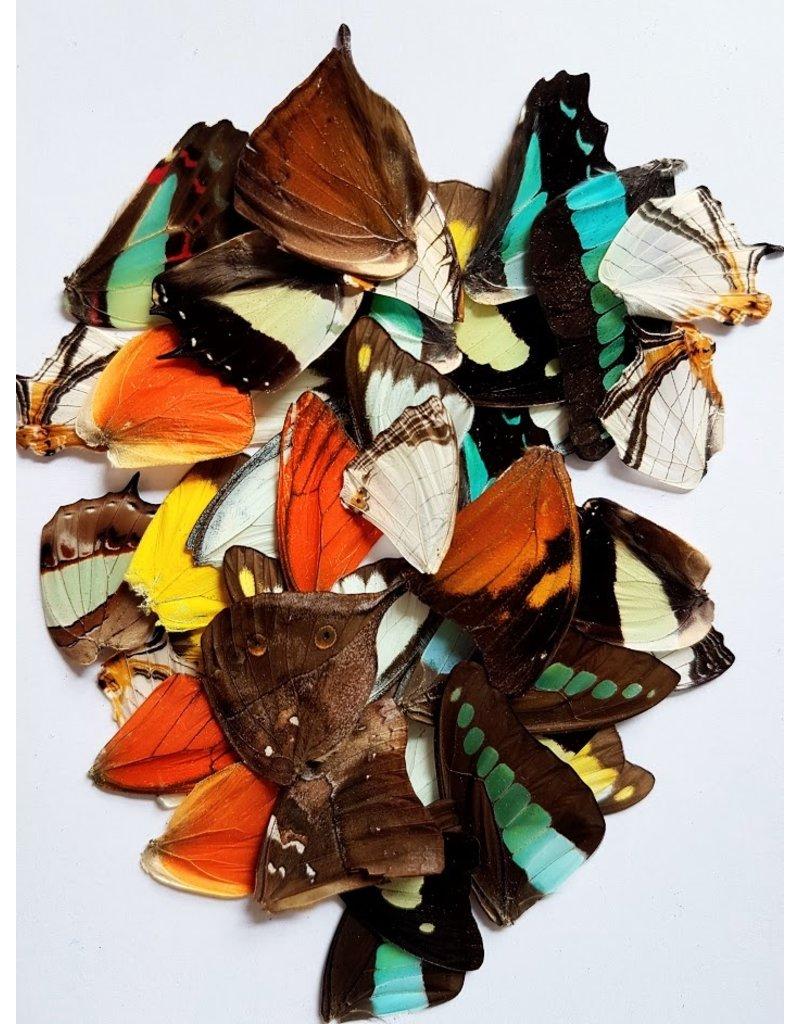 . Vlinder vleugels divers 10 stuks
