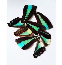 . Vlinder vleugels blauw-groen 10 stuks