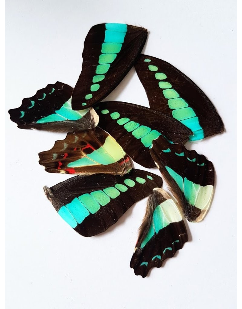 . Buttefly wings blue-green 10 pieces