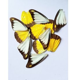 . Butterfly wings yellow-white10 pieces