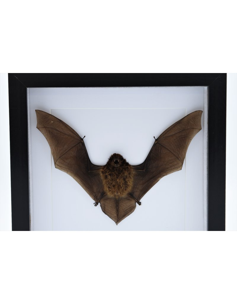 Nature Deco Flying bat in luxury 3D frame 22x22cm