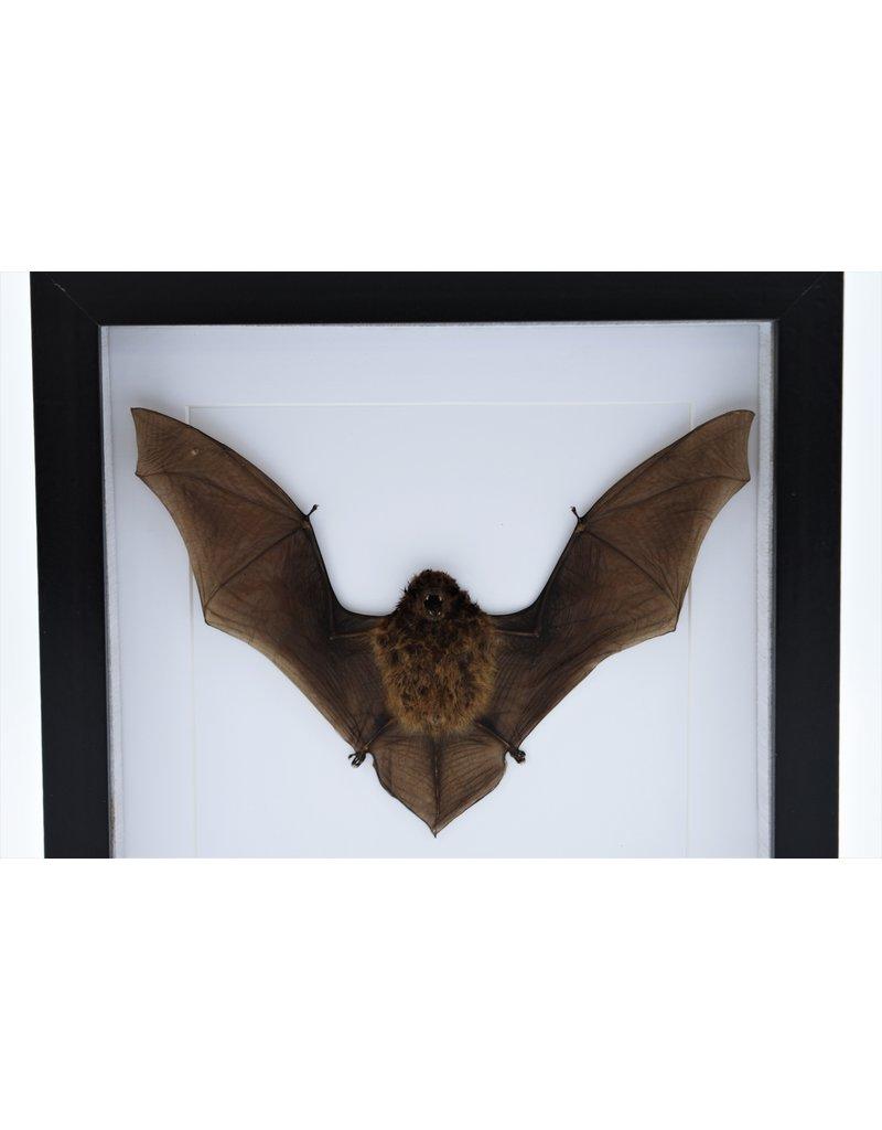 Nature Deco Vliegende vleermuis in luxe 3D lijst 22 x 22cm