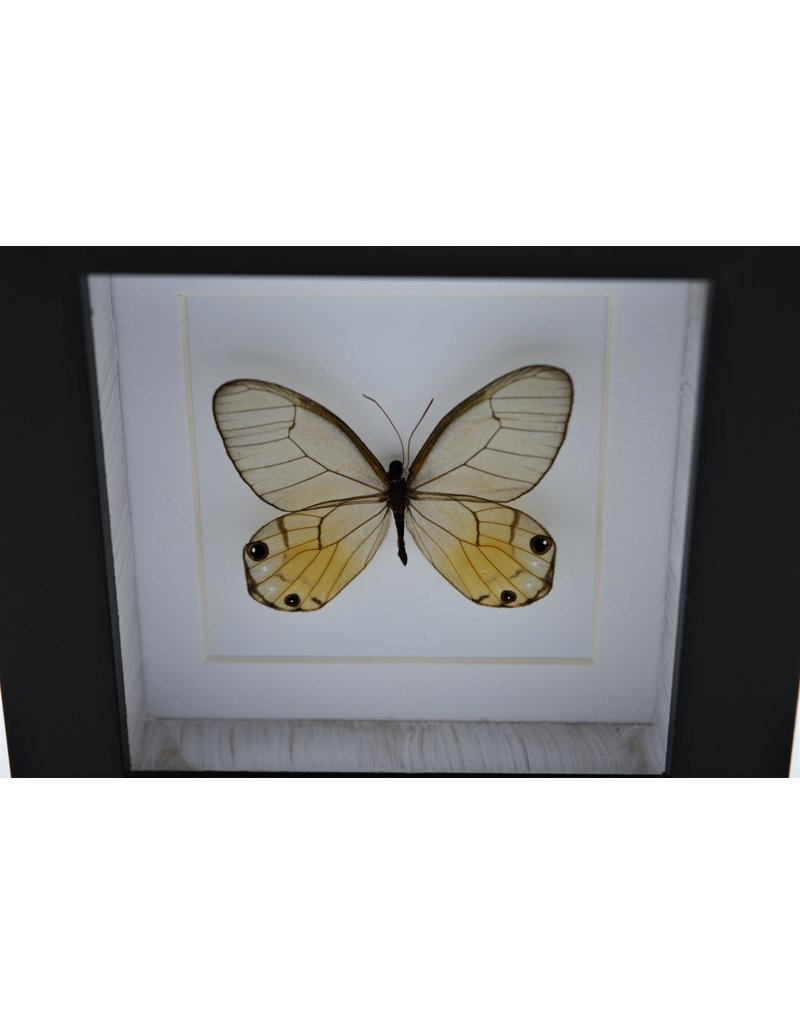 Nature Deco Haetera Piera in luxury 3D frame 12 x 12 cm