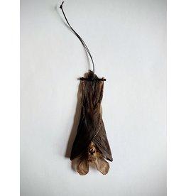 . Nycteris Javanica (vleermuis) hangend