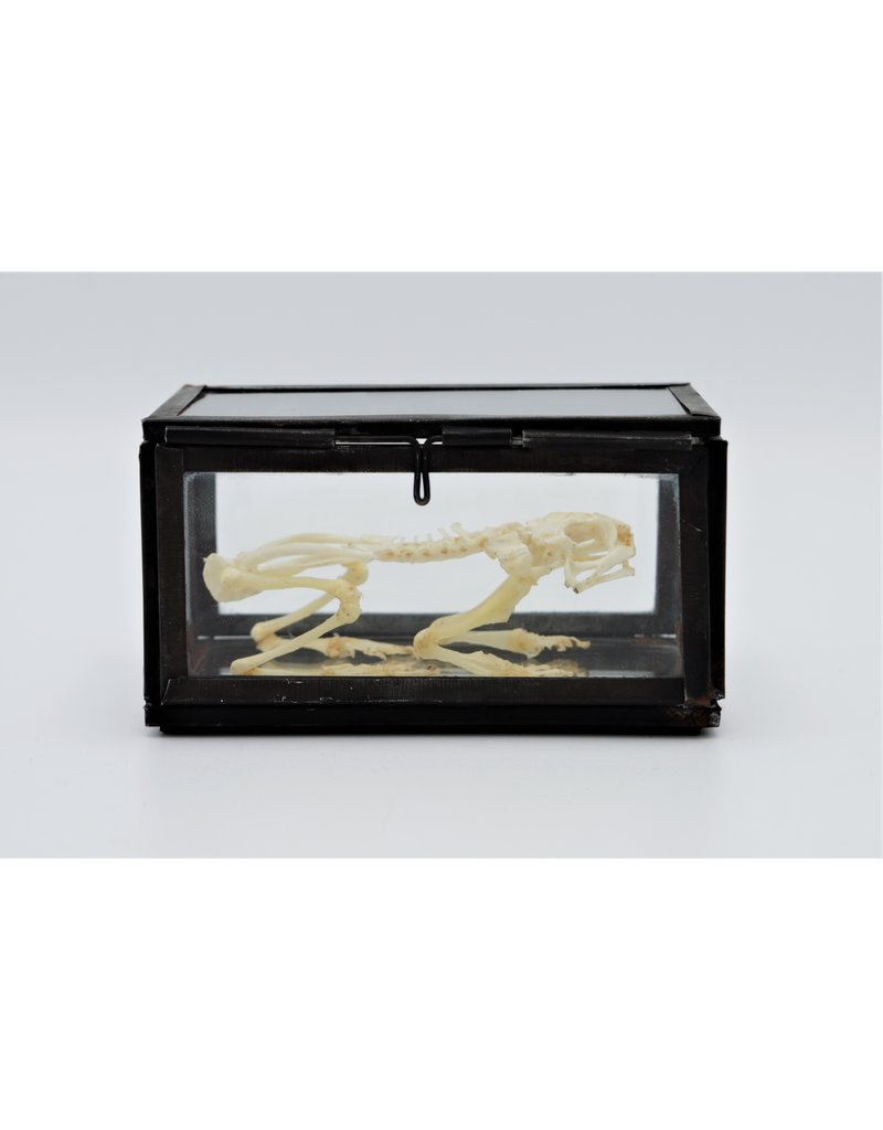 Nature Deco Frog skeleton in a glass box