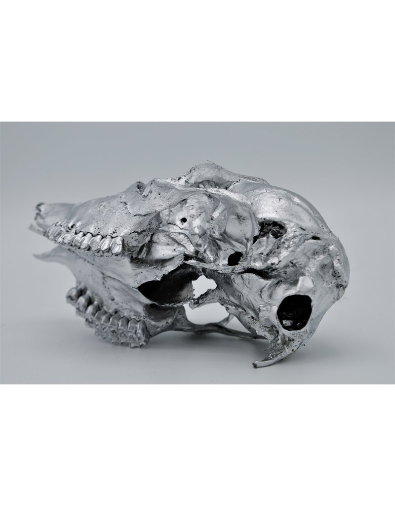 . Ree schedel zilver