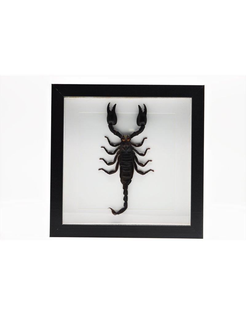 Nature Deco Mounted scorpion in luxury 3D frame